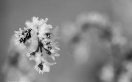 Winter Wonders Photography